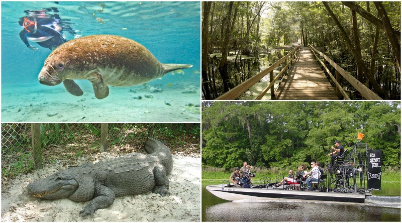 17 Best Florida Everglades Airboat Tours to see Alligators