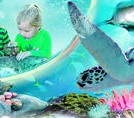Sydney Attractions Pass: SEA LIFE Aquarium, Sydney Tower Eye, WILD LIFE Zoo, Madame Tussauds and Manly SEA LIFE Sanctuary