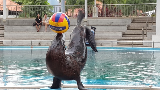 Seal showing off