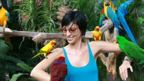 private-tour-singapore-jurong-bird-park